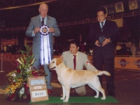 CHAMPION JKC DOG SHOW