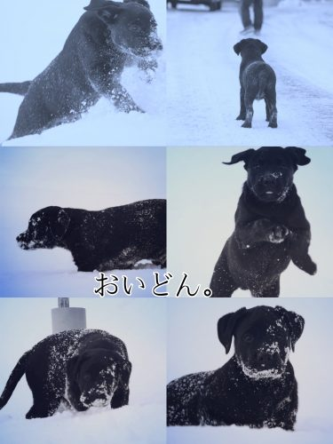 19-01-29-14-56-58-367_deco_2.jpg